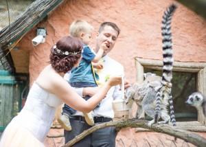 Takhle to vypadalo před rokem v Zooparku Zájezd.